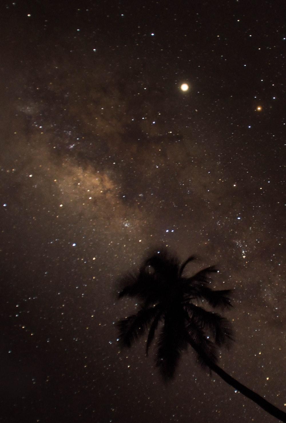silhouette of coconut tree during nighttime