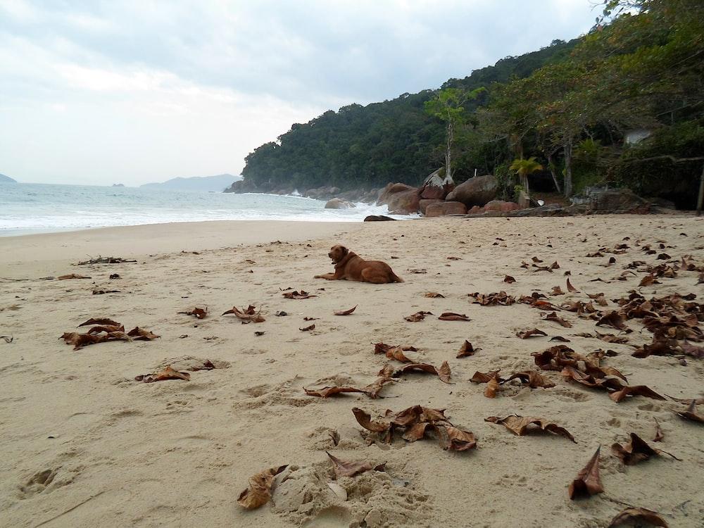 brown dog on beach sand