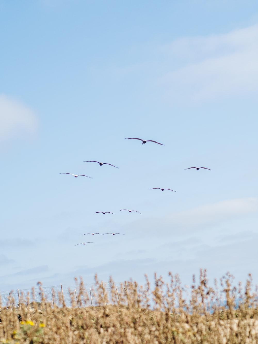 school of bird flying during daytime