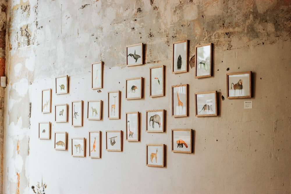 assorted animal photos on wall