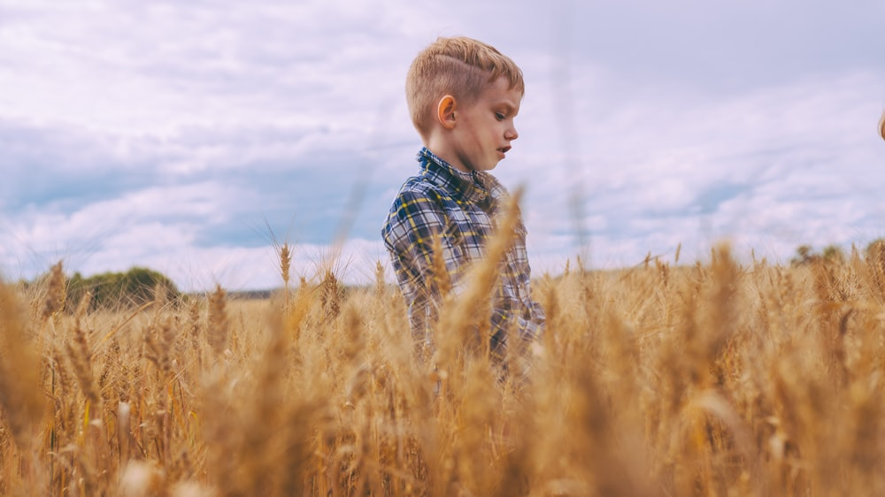 boy standing on bed of brown wheat plants