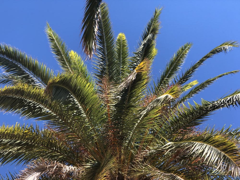 photo of green-leafed coconut tree