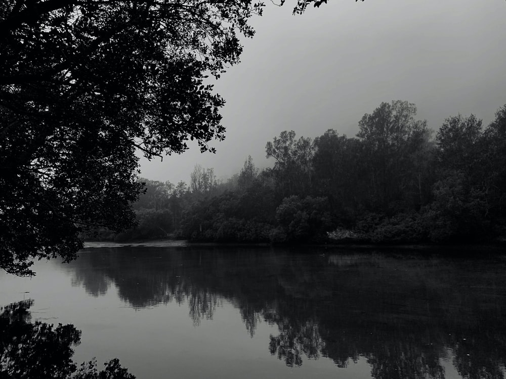 calm body of water and trees in greyscale photography