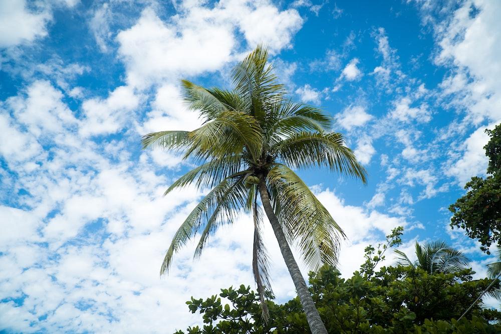 high-angle photo of coconut tree