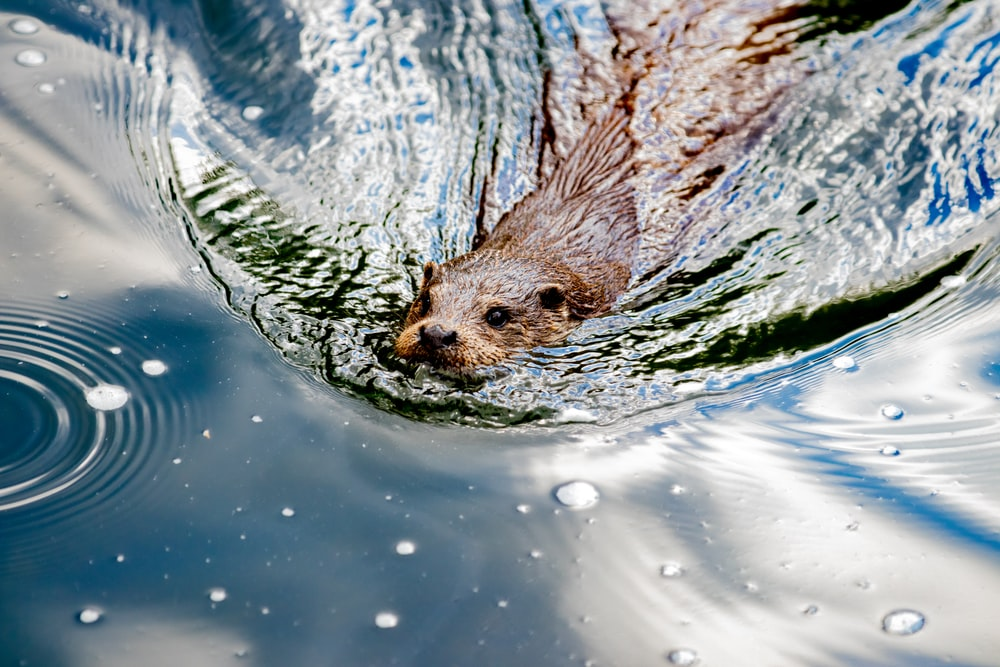brown animal on body of water