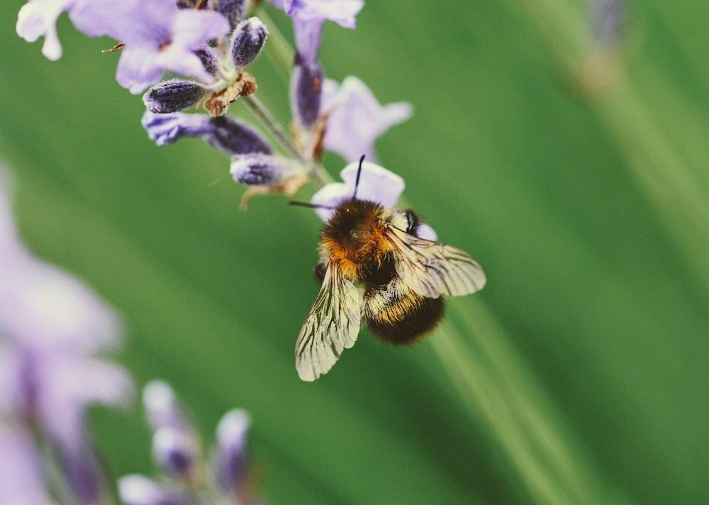 brown bee on flower