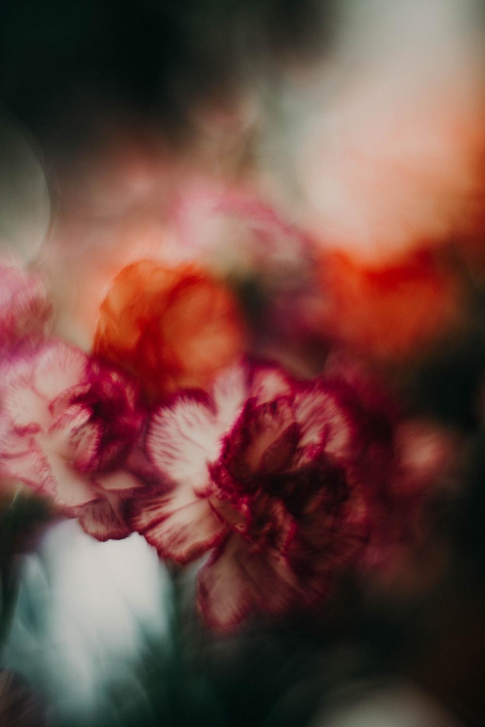 closeup photo of purple flowers