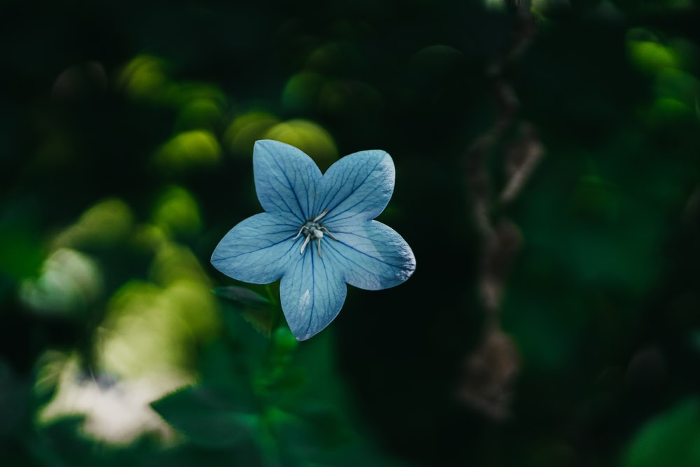 shallow focus photo of blue flower