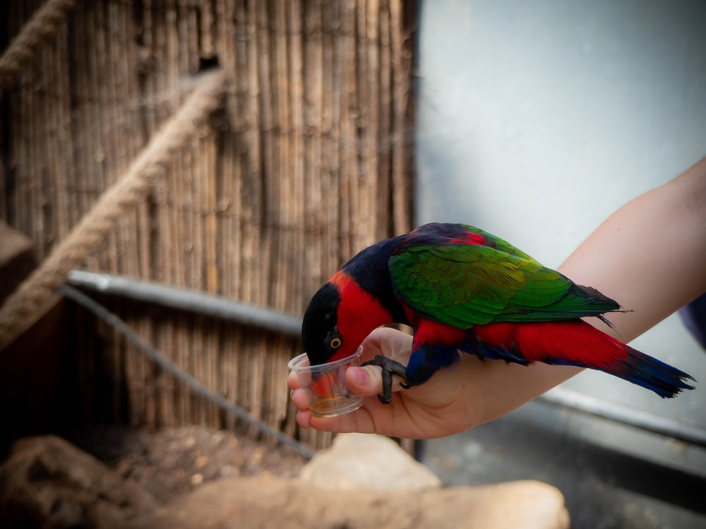 person holding cup while parrot drinking