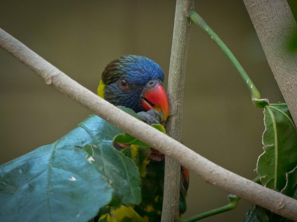 shallow focus photo of blue bird