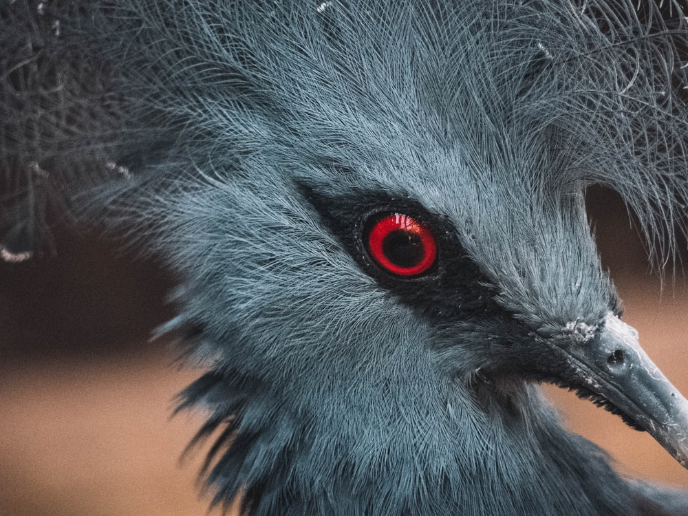 closeup photo of gray bird