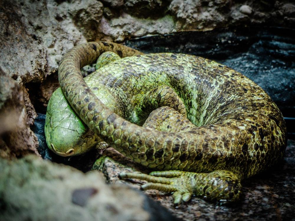 green reptile lying on floor