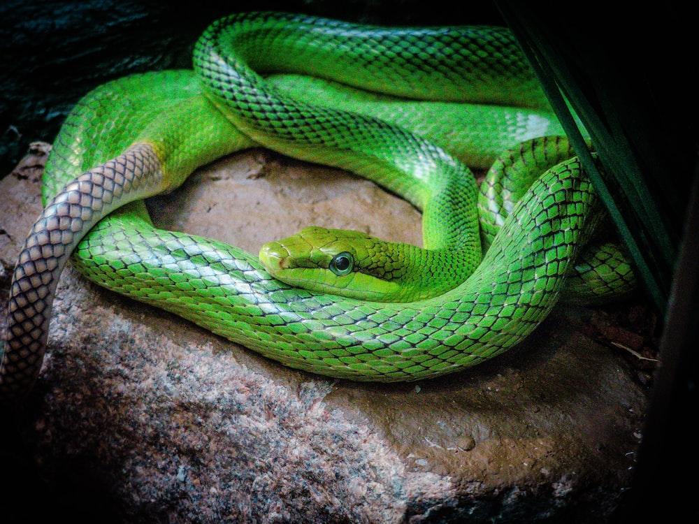 green snake on stone