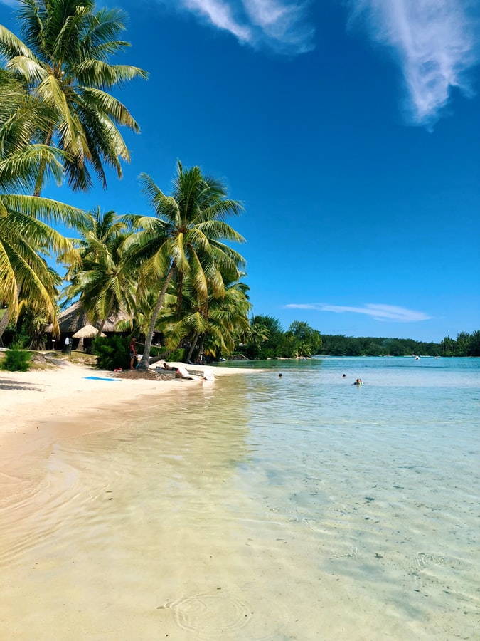 palm trees on a beach in Moorea, French Polynesia