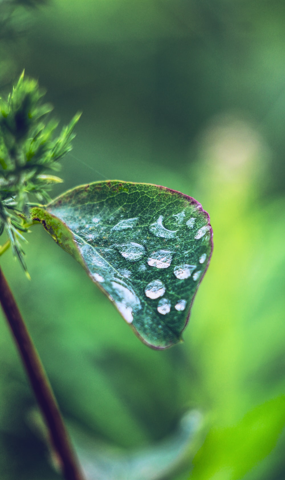 water dew on green leaves