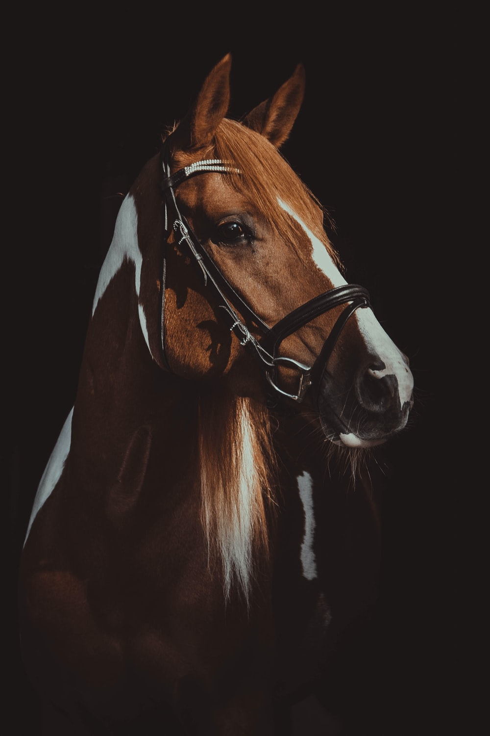 brown and white horse on focus photography