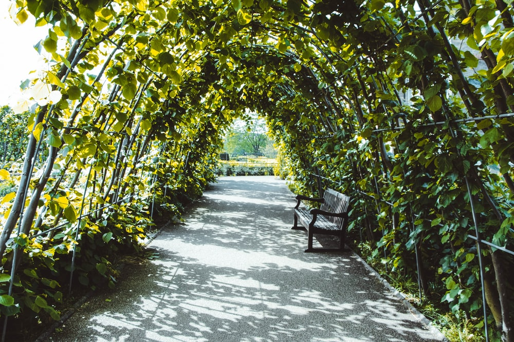 bench in tunnel of tree