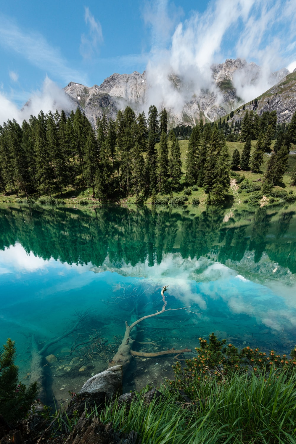 photography of lake surrounded by pine trees during daytime