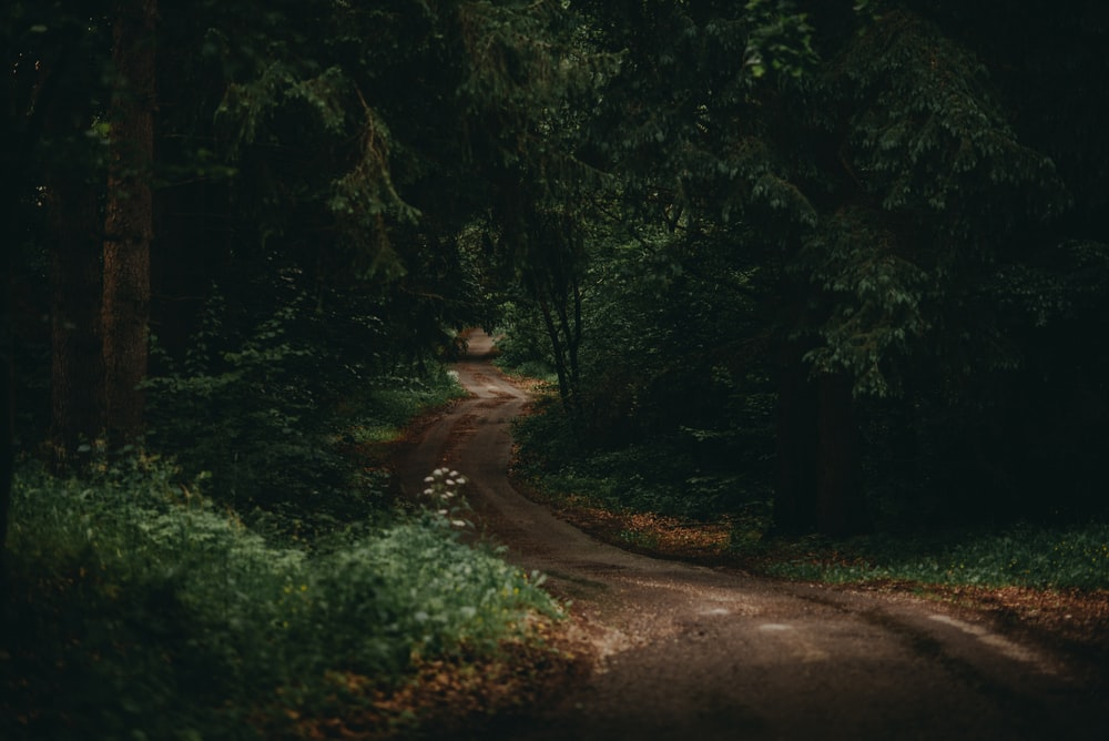 brown walkway at middle of forest
