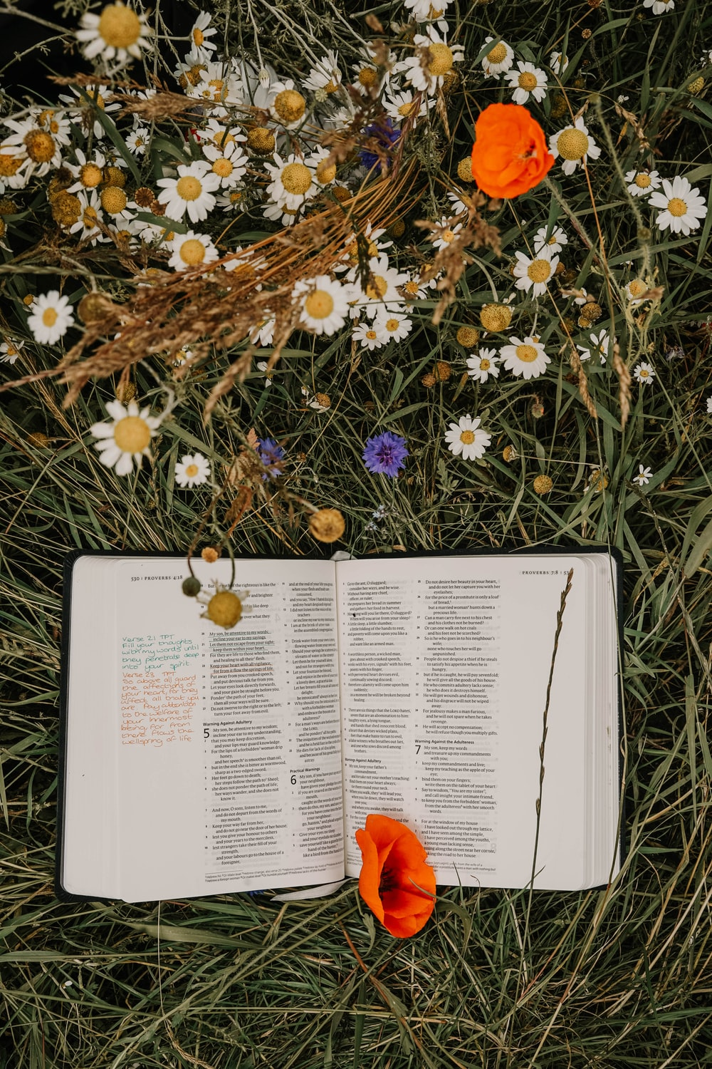 open book on green grasses