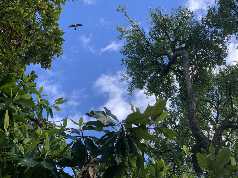 green-leafed plants and trees