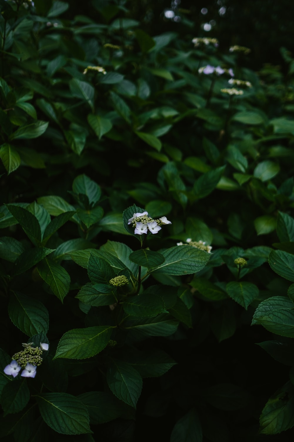 white-petaled flowers growing on green-leafed plant
