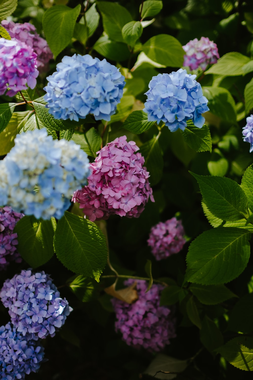 blue and pink petaled flowers