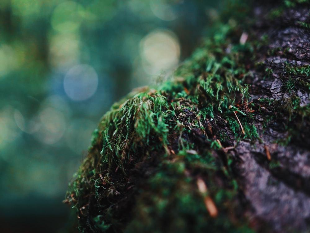 green moss growing on grey rock