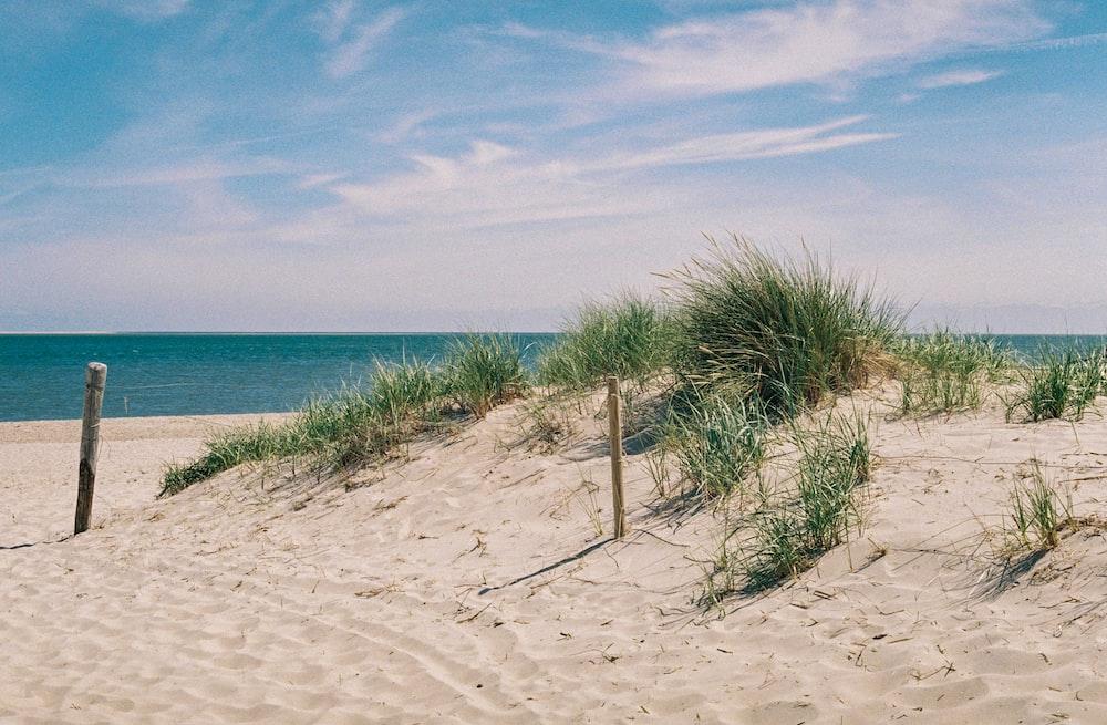 green grass on white sand at daytime