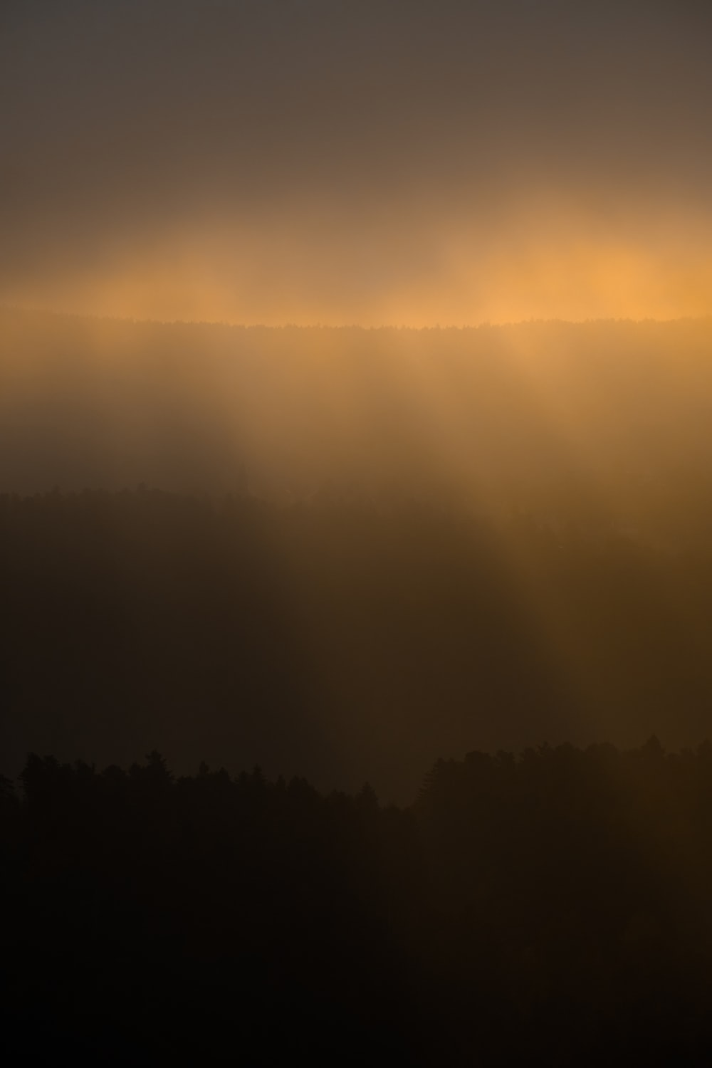 landscape photo of a forest at sunrise