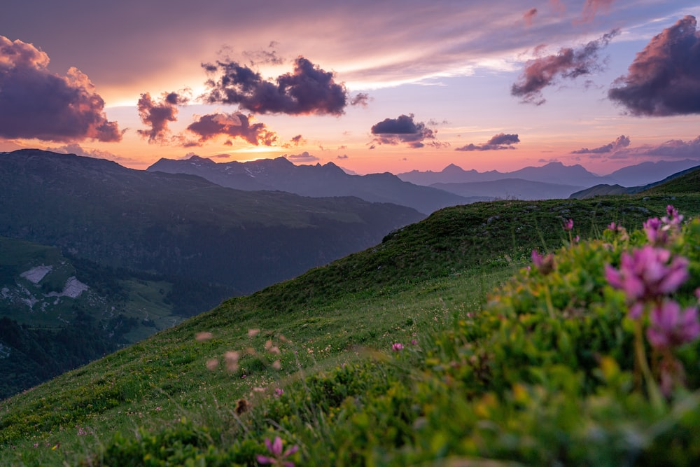 purple-petaled flowers growing at the mountain during sunrise