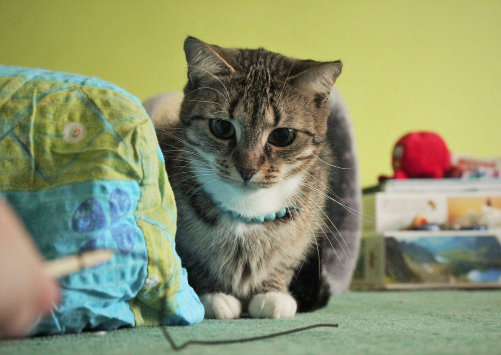 brown tabby cat beside boxes and blue textile
