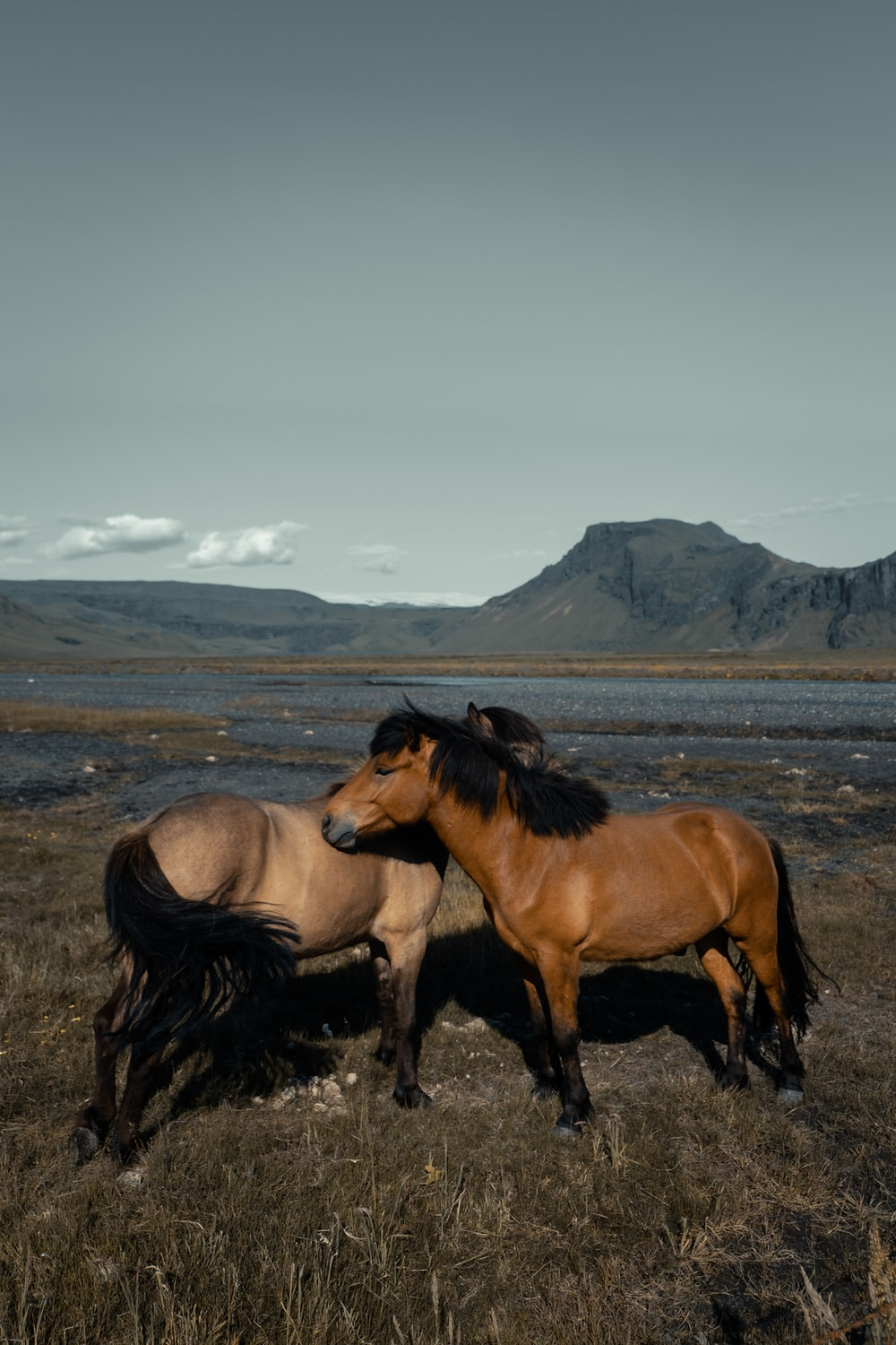 two brown horses on grass field