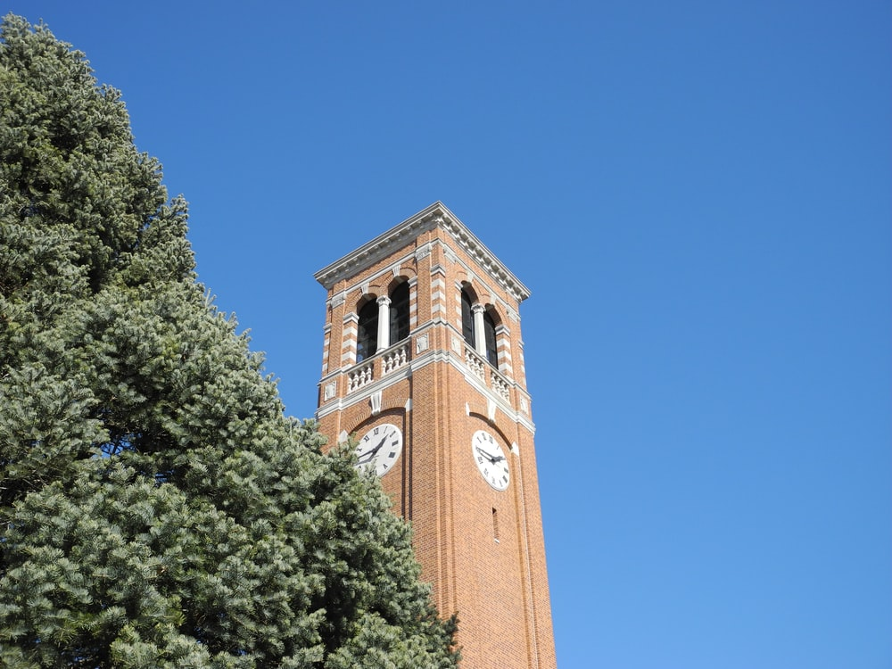 brown clock tower over the green tree