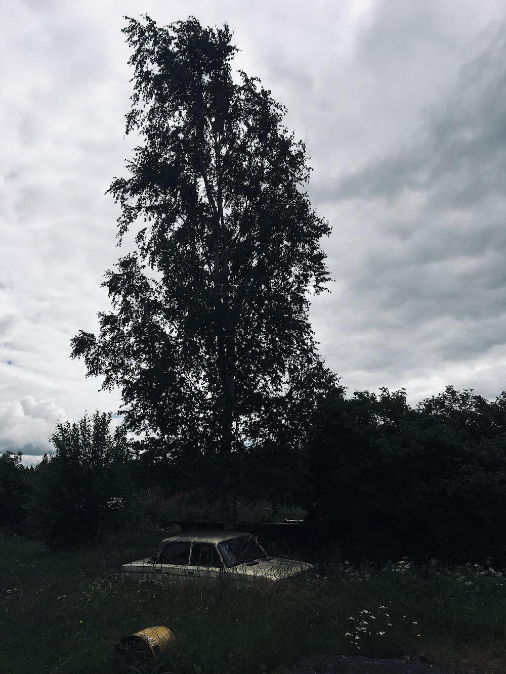 gray near trees
