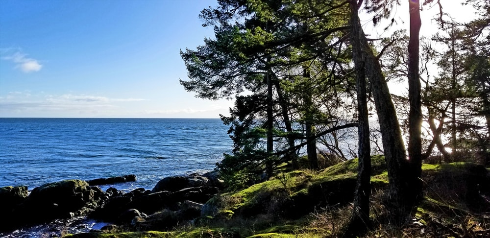 rock formations near trees viewing blue sea