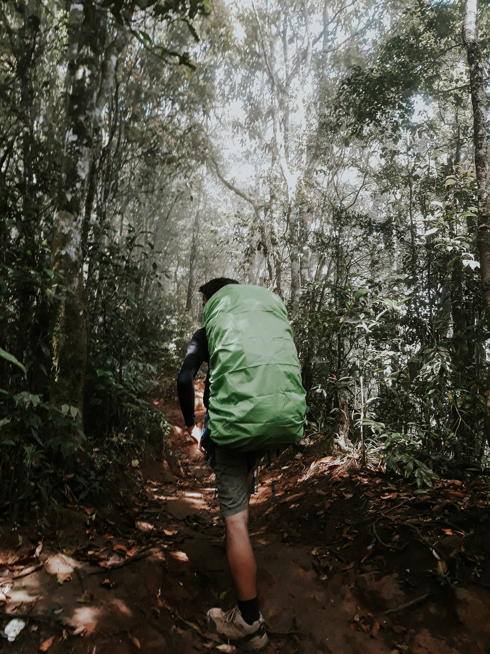 person carrying green hiking bag