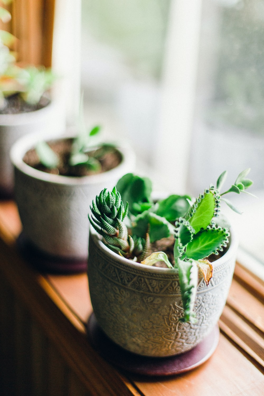 pot of green plant