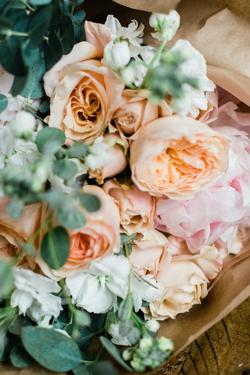 beige and pink petaled flowers