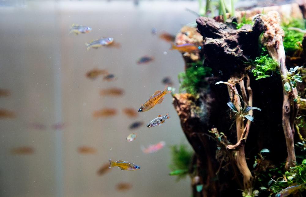 school of fish beside water plant