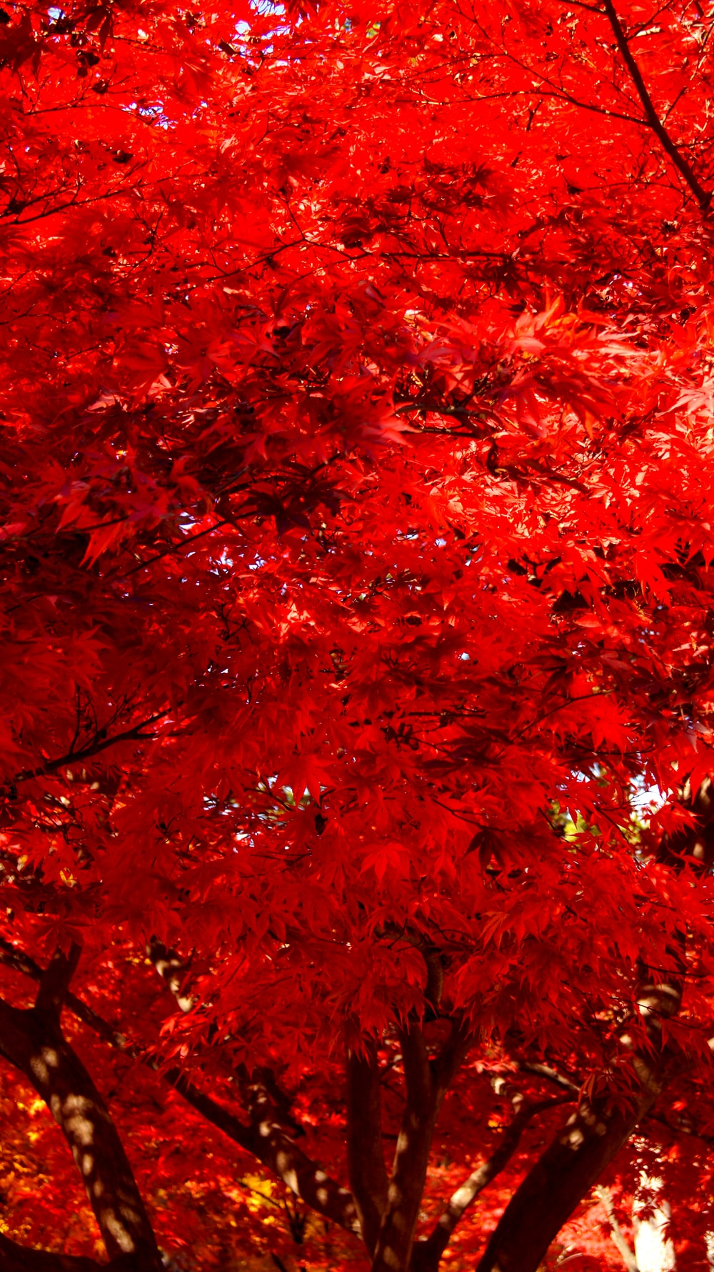 red-leafed tree during daytime