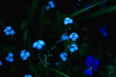 blue petaled flower lot