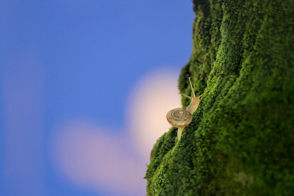 brown snail on green field during daytime