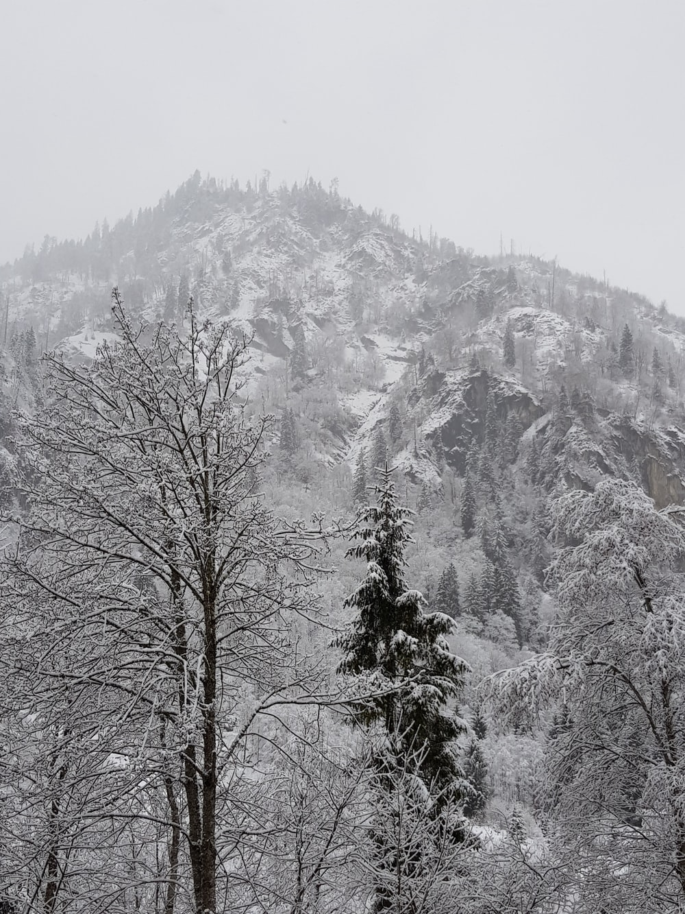 snow covered trees and mountain