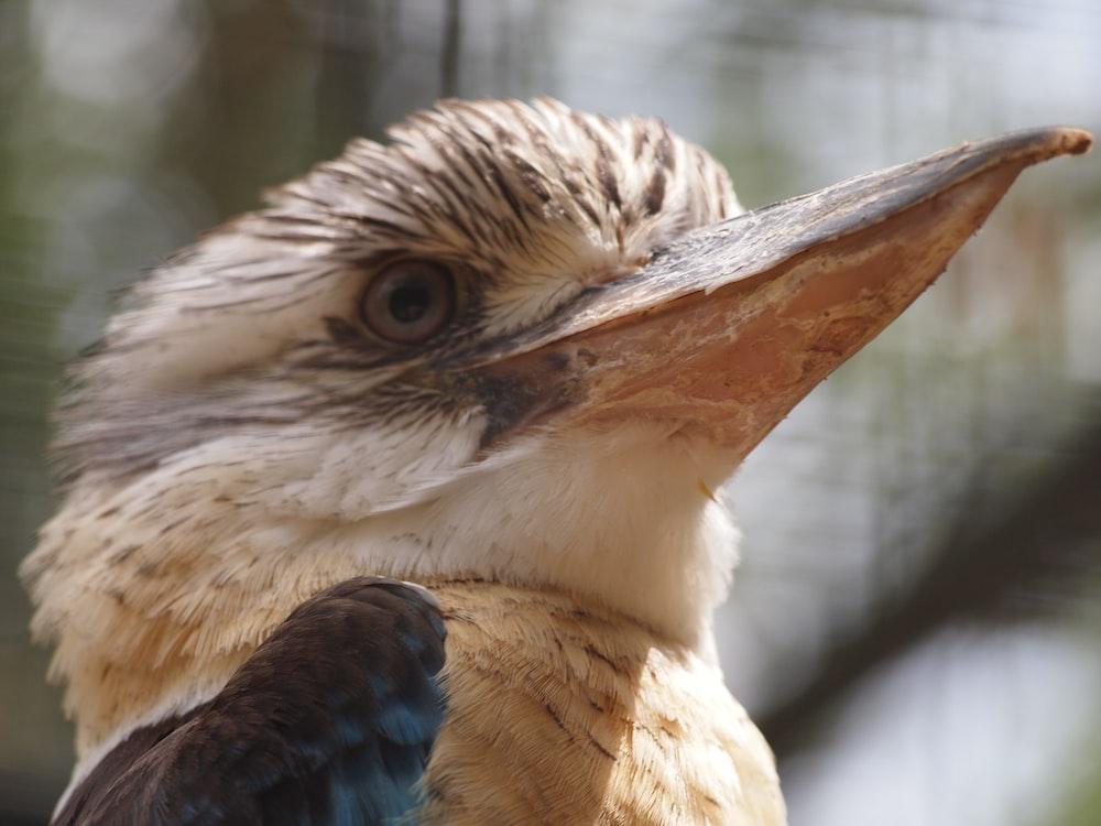 brown long beak bird looking sharply