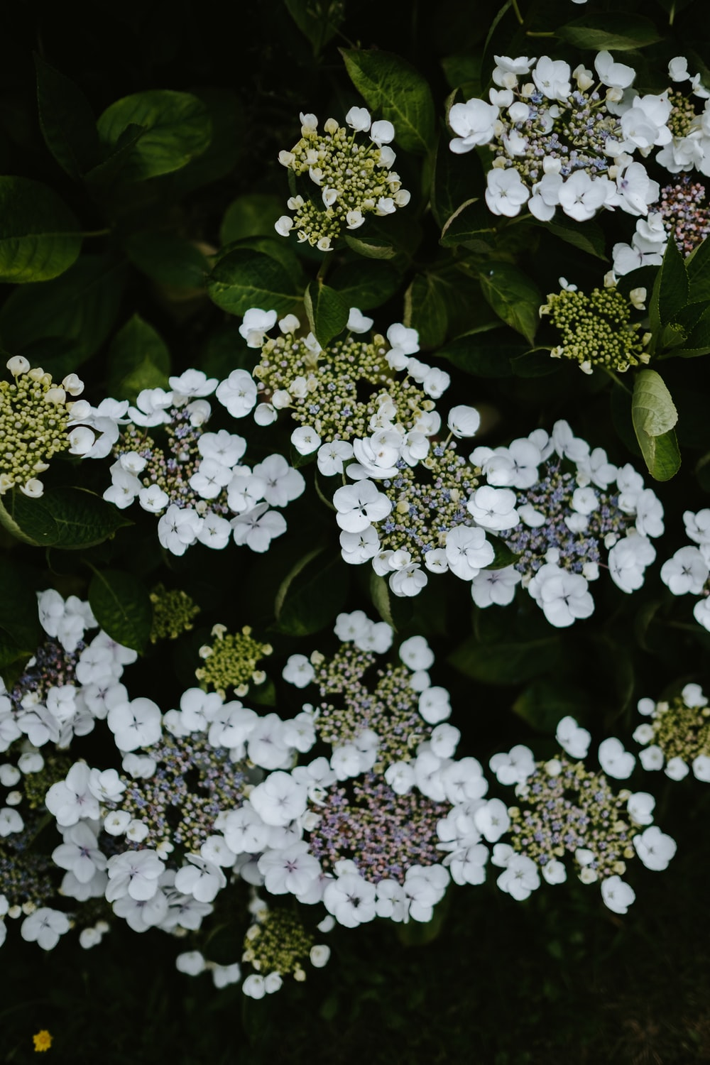 white-petaled flowers
