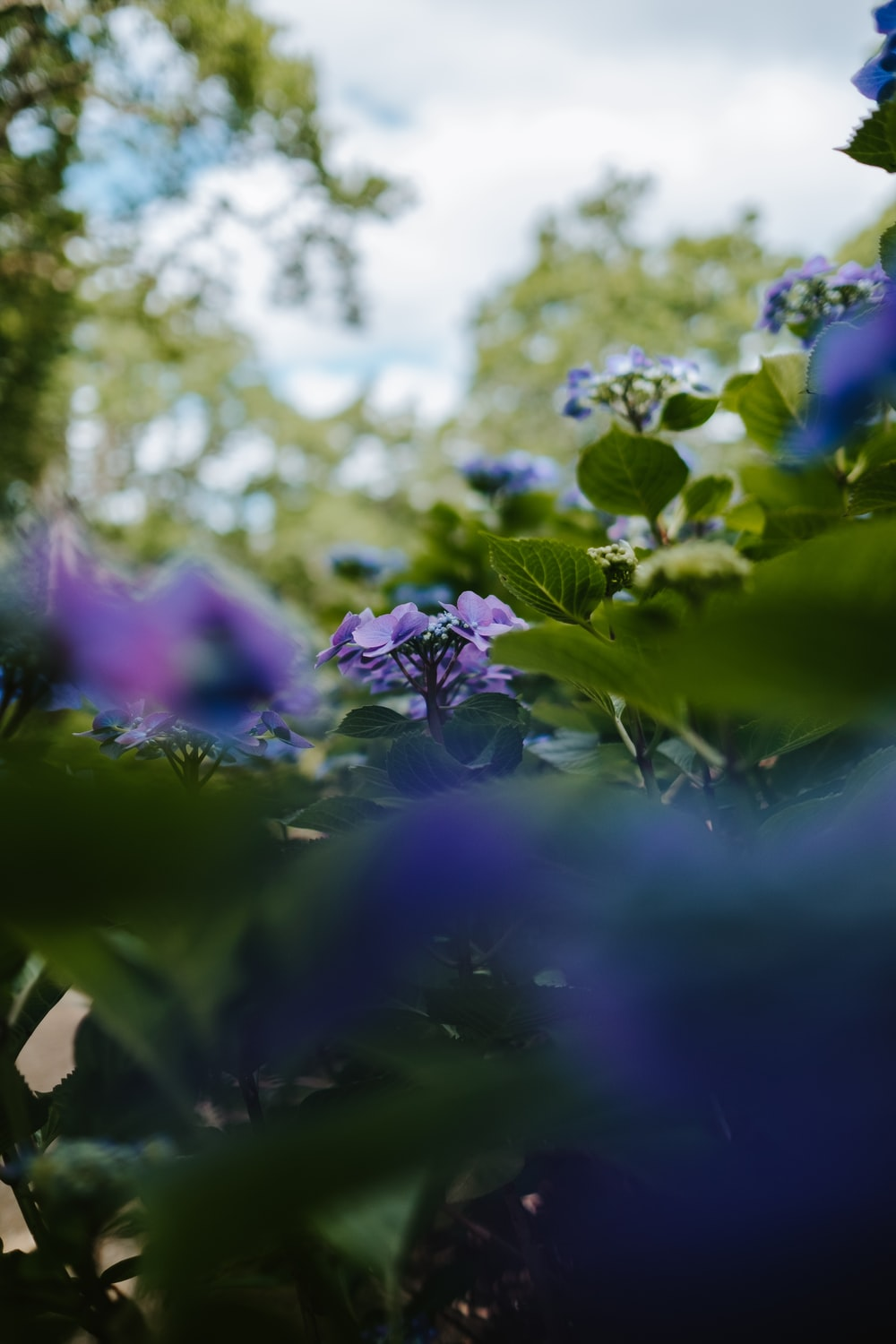 shallow focus photography of green-leafed plant with purple flowers