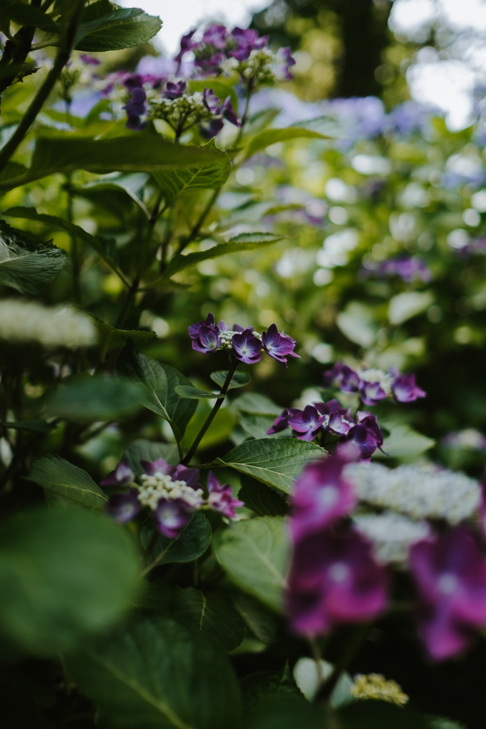 selective focus photography of green-leafed purple-petaled flowering plant