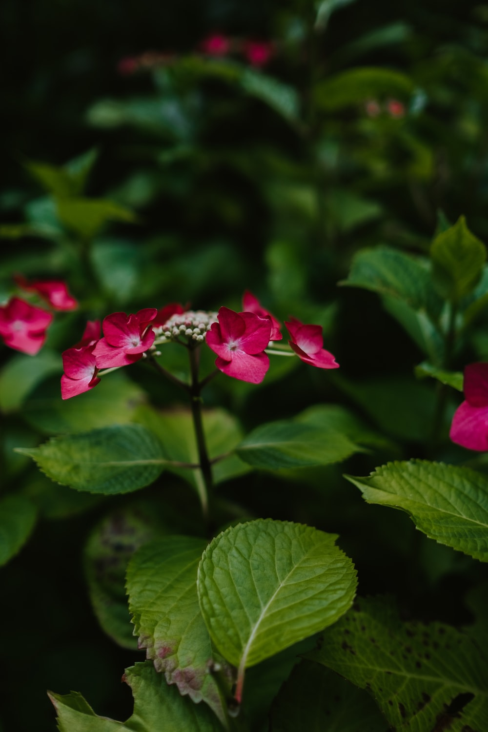 red flowered plant