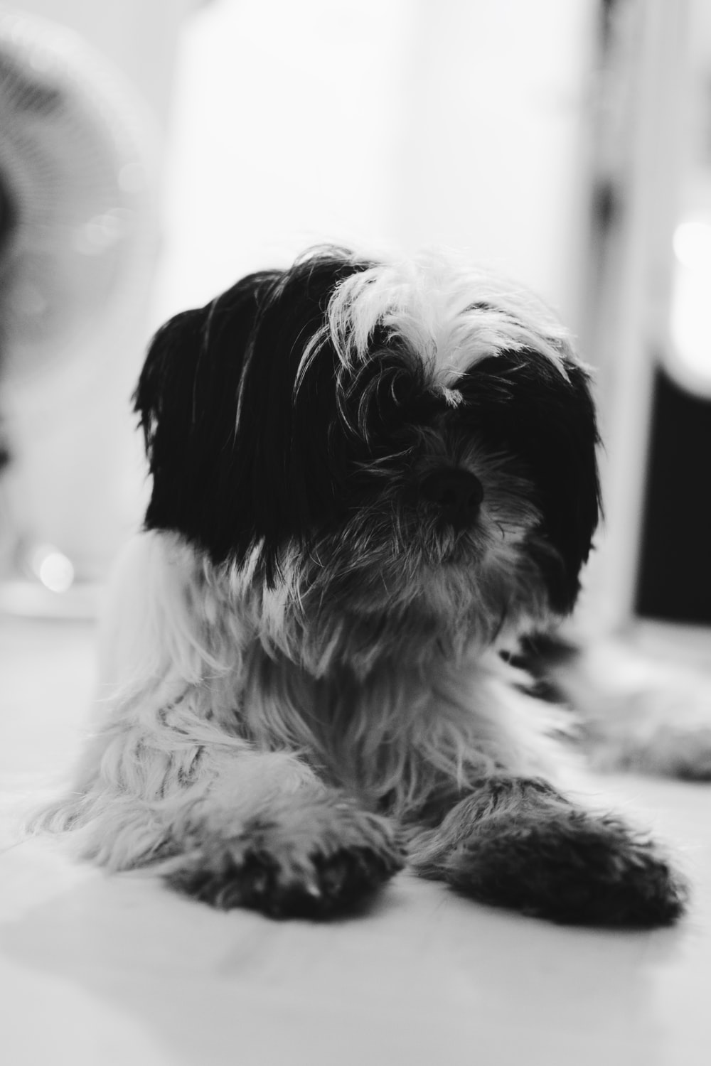 grayscale photograph of dog